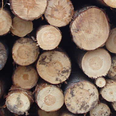 Milwaukee Web Development for Forestry Management and Lumber Manufacturing Company